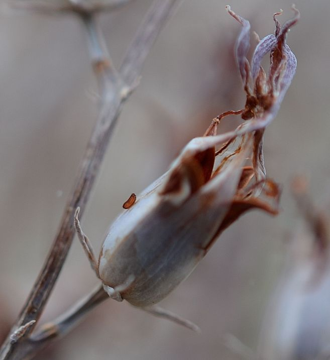 Tiny seed - one of my first macro's