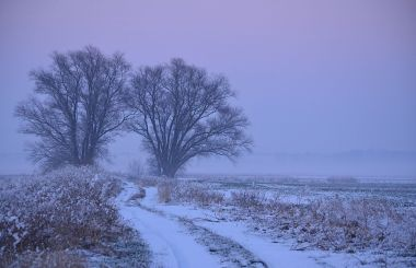 2 trees in the snow at dusk