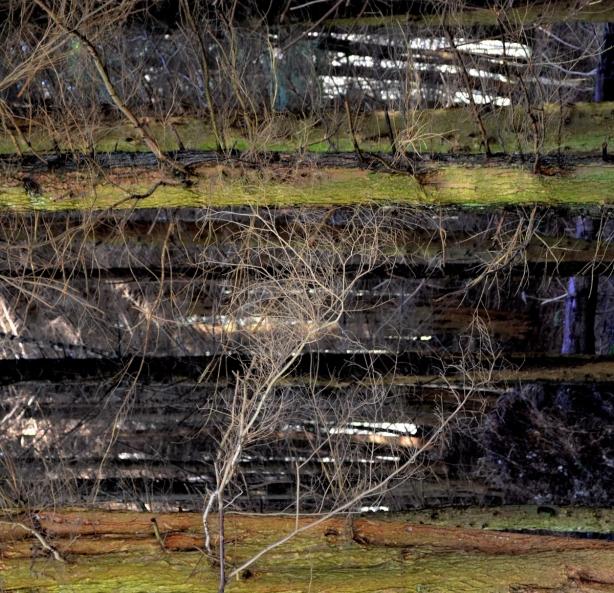 sideways trees