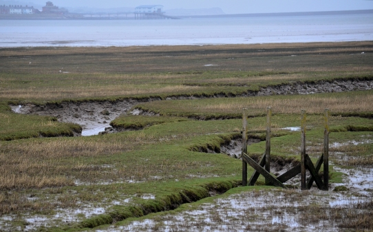 wooden structure in the mud flats
