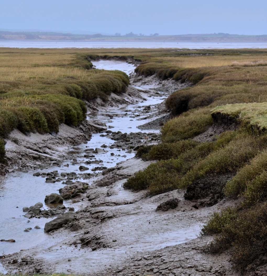 Muddy channel out to the sea
