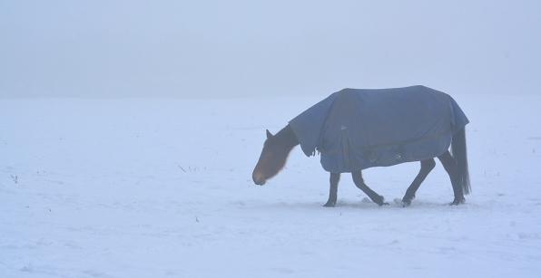 horse in the fog 2