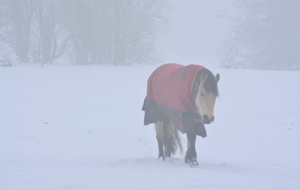 horse walking out of the fog