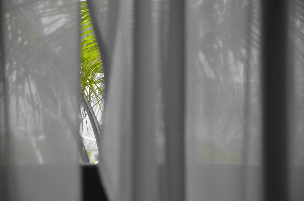 cool breeze through the window. green palm leaves showing in the gap
