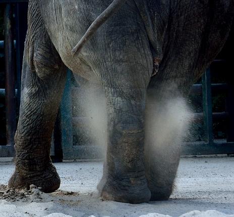 elephants legs with dust cloud between them
