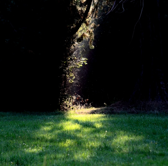 dappled sun from a shaft of light between trees, on grass