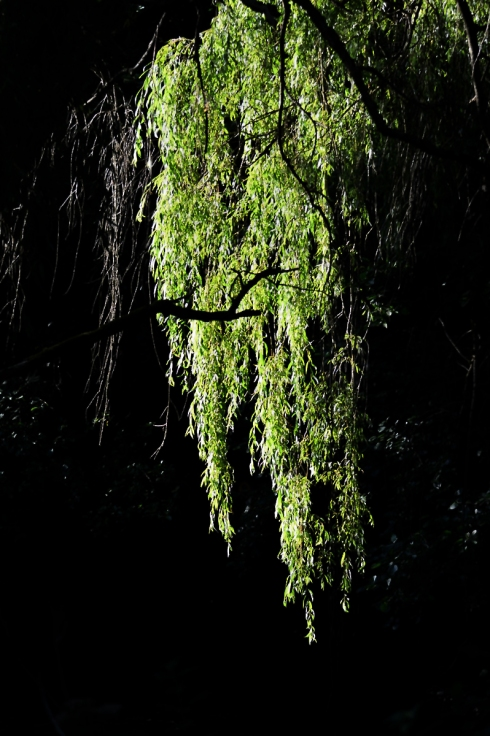cascade of leaves