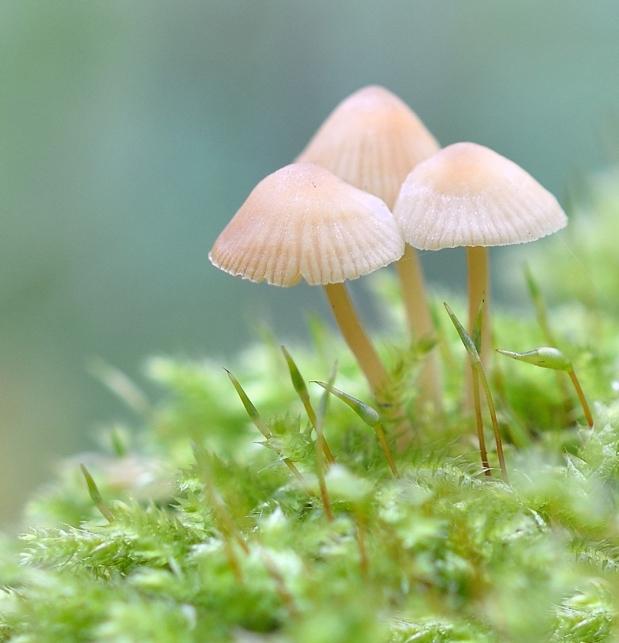 tiny mushroom family