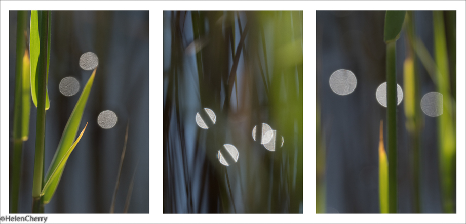 Reeds and light Triptych 2