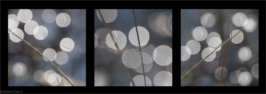 Reeds and light Triptych 3