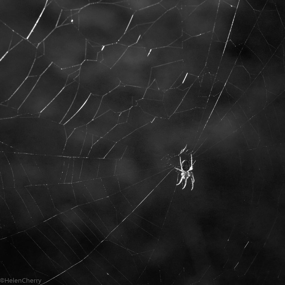 Spider 3 (1 of 1)
