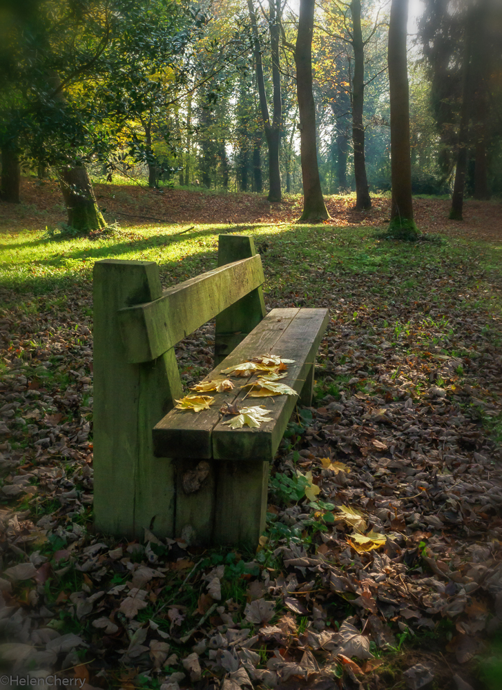 The Bench (1 of 1)