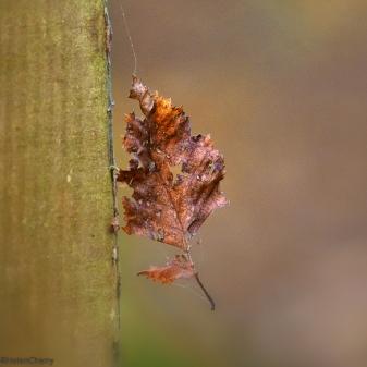 leaf 1 (1 of 1)